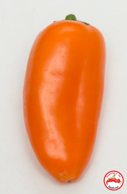 C. annuum var. 'Minipaprika Orange'