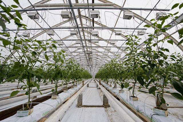 Huge greenhouses