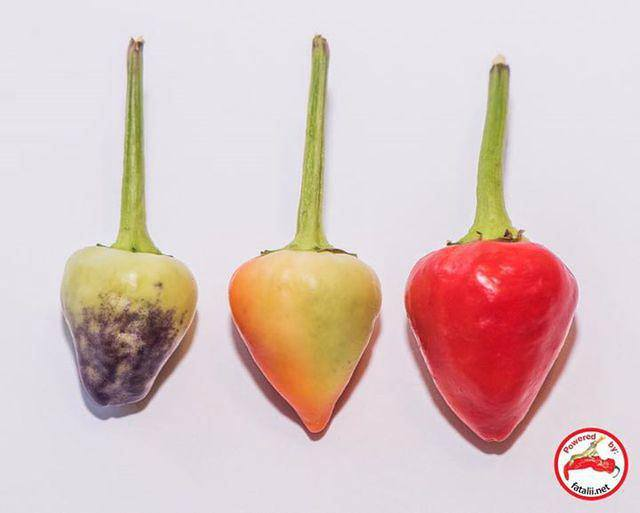 New varieties now available at