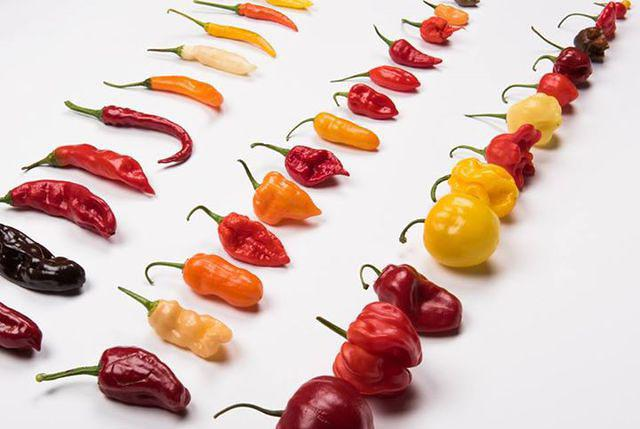If it's hard to pick the chili pepper varieties for growing, I'd suggest trying as different ones as possible