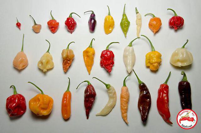 Different chile pepper varieties