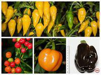 New varieties added to